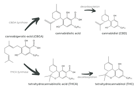 Decarboxylation Temperature Chart Decarboxylation 101 A Guide To More Effective Medicine