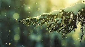 Green Winter Desktop Wallpaper