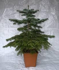 Singing Christmas Tree  WikipediaThe Living Christmas Tree Knoxville Tn