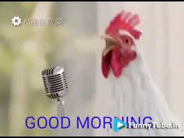 en s singing good morning song funny