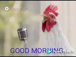 en s singing good morning song funny
