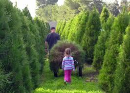 photo: Family Christmas Tree Farm