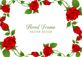 beautiful red rose flower frame background