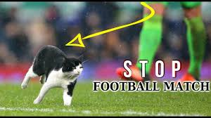 top funny crazy cats stopped football match hd