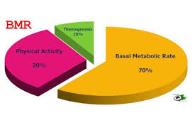 Basal Metabolic Rate Bmr Chart Basal Metabolic Rate Weight Loss Calculator Noble Home