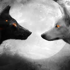 black and white wolf wallpaper. Black And White Wolf Wallpaper Engine Animal Wolves Engineering To