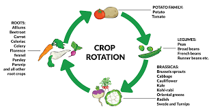 Crop Rotation Chart Crop Rotation