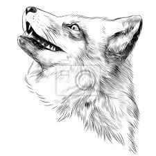 Fox Faccia Schizzo Grafica Vettoriale Disegno In Bianco E Nero Carta