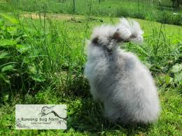 you are now a proud fuzzy bunny pa the information provided is intended to help you keep your fuzzy bunny healthy happy in the many years to come