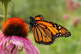 Image result for green house butterfly bush