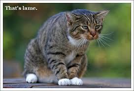 That's Lame Cat Meme - Cat Planet | Cat Planet via Relatably.com
