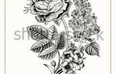 Kleurplaat Rozen Mooi 267 Best Rozen En Bloemen Stempels Images On