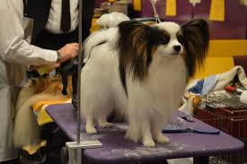 the right table can certainly help a groomer out photo petful