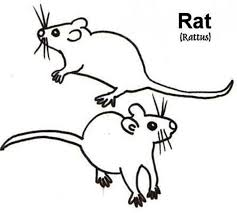 Small Picture Picture of Mouse and Rat Coloring Pages Bulk Color