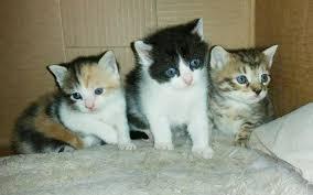 animal shelter kittens. Interesting Shelter A Litter Of Kittens In Animal Shelter Kittens