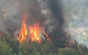 Orman yangını evlere sıçradı - Son dakika haberleri