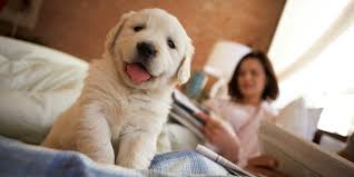 Safely Living With Pets Don t Let Your Pet Lick Your Face and.