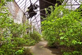 botany decay ruin old building graffiti flora waterway weathered warehouse transience shrub neglected dilapidated weird botanical garden