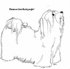 Small Picture havanese coloring pages Google Search havana silk Pinterest