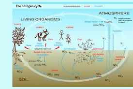Toms Marine Biology A Block Diagram Of Nitrogen Cycle