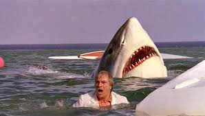 shark attack on humans. Wonderful Humans Great White Shark Attack Inside Shark Attack On Humans