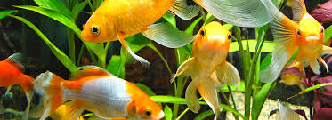 Image result for aquarium water is going to be safe for the fish