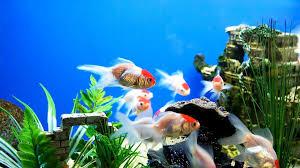 HD Aquarium Wallpapers - Top Free HD ...