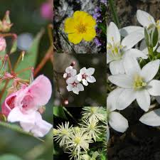 Bach Flower Remedies Chart List And Indications Of The Bach Flower Remedies