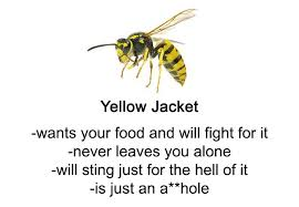 Someone Wrote A Funny Guide About Bees And Wasps And You