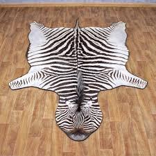 the burchell s zebra
