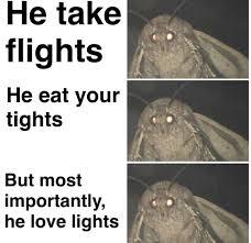 Behind The Moth Meme Mastering Entomology