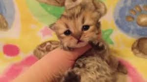 cute baby cats for sale. Interesting Cute On Cute Baby Cats For Sale