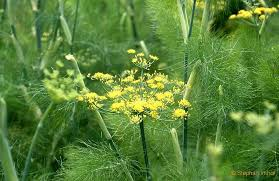 plante remède