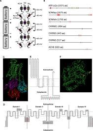 mv 443 form a tail of two voltages proteomic comparison of the three electric