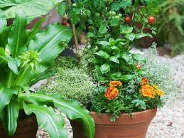 tips for companion planting container