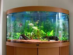 fish tank lighting ideas. Fish Tank Design Cuisine Beautiful Aquarium Ideas For Home With Nice Wooden Awesome Designs Pictures Interior Lighting