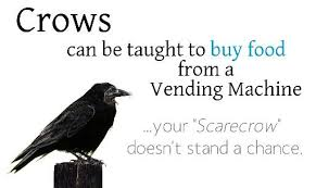 Crow Vending Machine Custom So Smart This Is One Of The Reasons Why I Love Them Animals