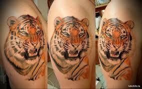 татуировка тигр значение эскизы фото и видео Infotattoo