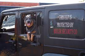Pin by Priscilla Benson on Jeeps | Blue heeler dogs, Aussie dogs, Dog rules
