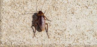 What Attracts Palmetto Bugs Terminix