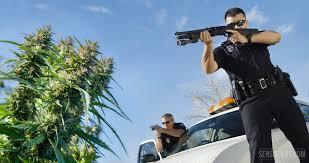 """Résultat de recherche d'images pour """"image personnalité connu cannabis"""""""