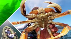ocean crab and rockfish from a raft fascinating crab pot footage