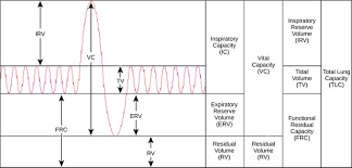 Volume And Capacity Chart 39 2c Lung Volumes And Capacities Biology Libretexts