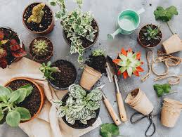 alternatives to traditional plant pots