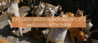 hundreds of cats. Delighful Cats To Hundreds Of Cats C