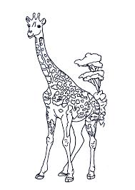 Giraffen Kleurplaten
