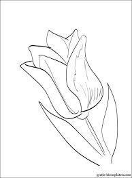 Tulpen Kleurplaat Gratis Kleurplaten