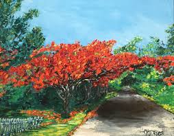 i love the flamboyan of puerto rico known also as the royal poinciana plant this brightly colored plant is found in many tropical places throughout the