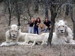 white lion band wallpaper. Interesting White White Lion Band Wallpaper  Photo9 Throughout Lion Band Wallpaper