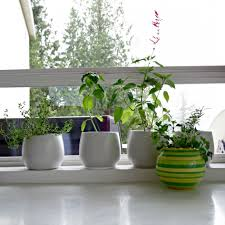 Indoor Kitchen Gardens Kitchen Fresh Herb Garden For Small Kitchen Herb Kitchen Garden